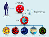 3d render of the making of induced pluripotent stem cells (iPSCs)
