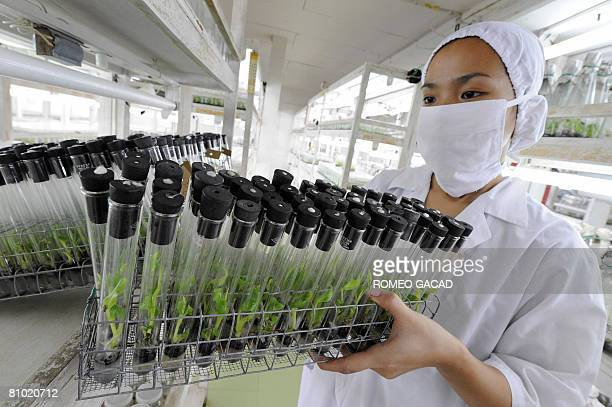 InflationpovertyfoodPhilippinesagriculturereformFEATURE by Cecil Morella A laboratory technician stacks test tubes containing tissue cultured banana...
