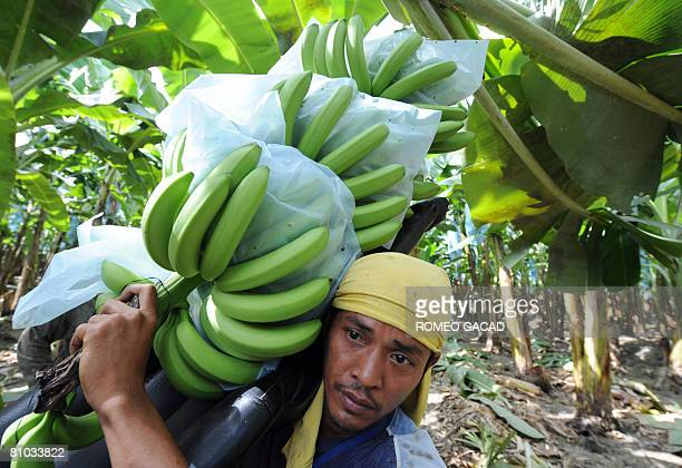 InflationpovertyfoodPhilippinesagriculturereformFEATURE by Cecil Morella A worker from the Philippines' biggest banana producer harvests banana...