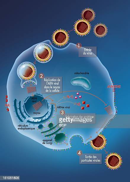 Influenza A H1N1 Illustration