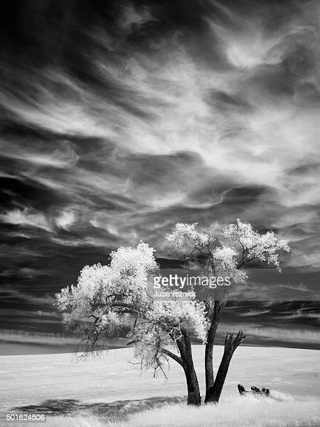 Infrared Palouse Tree