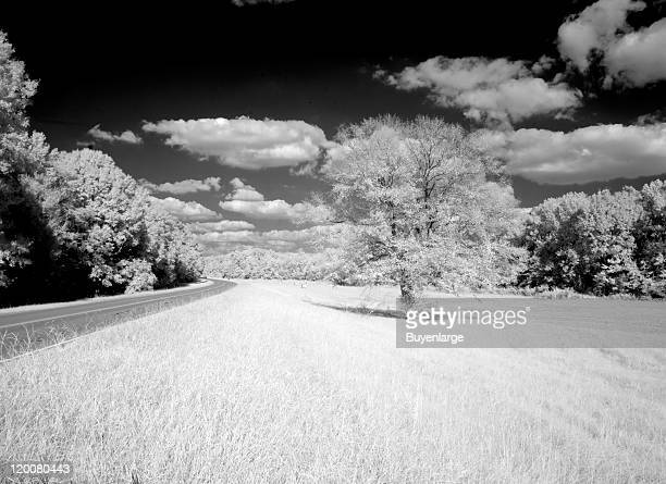 Infrared photograph of the Natchez Trace Parkway Natchez Mississippi 2010