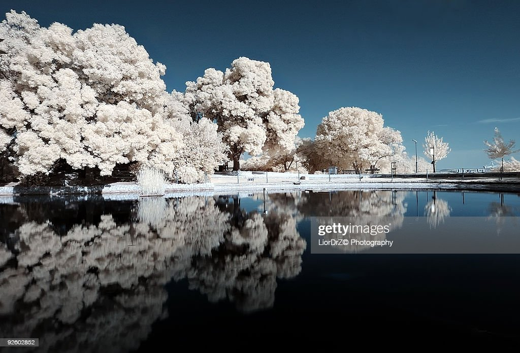 Infrared Reflection : Stock Photo