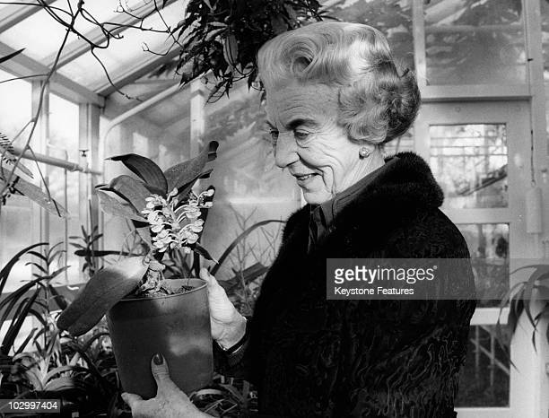 Ingrid of Denmark queen consort of King Frederick IX of Denmark pictured in her greenhouse where she cultivates orchids in an official image...