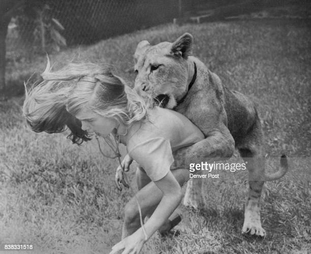Ingrid the Lioness only wanted to play as she grabbed Jeannette Mahoney Ingrid took an unexpected trip Monday from her home at 3140 Zenobia St and...