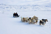 Inhabitants arrive at the town of Ilulissat with their sled dogs Though the disappearing ice cap could lead to higher sea levels all over the world...