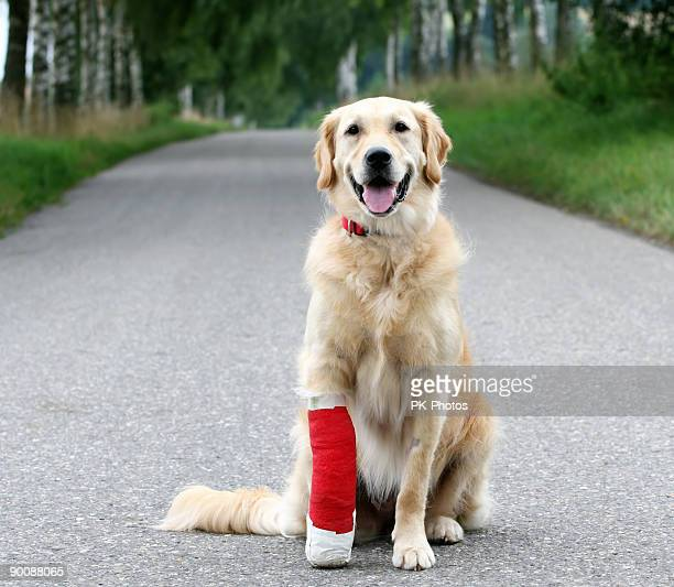 Injured Dog