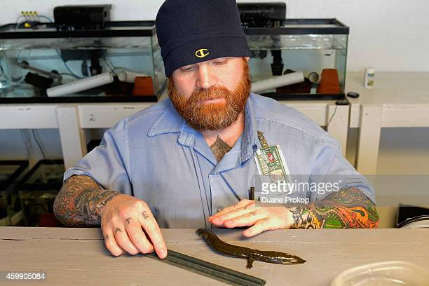 Inmate Robert Cooper prepares to measure a hellbender salamander that is part of the Green Initiative at Marion Correctional Institution on December...