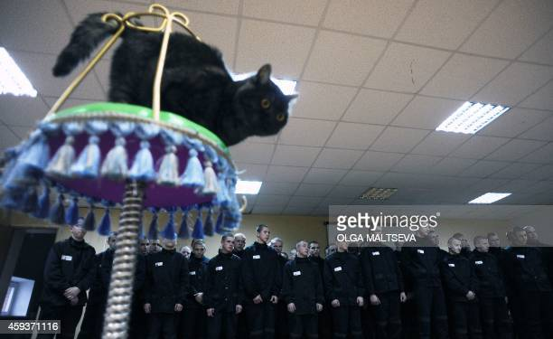 Inmates looks at a performance by Russian clown and cat trainer Yuri Kuklachev at the Kolpino prison outside St Petersburg on November 21 2014 AFP...