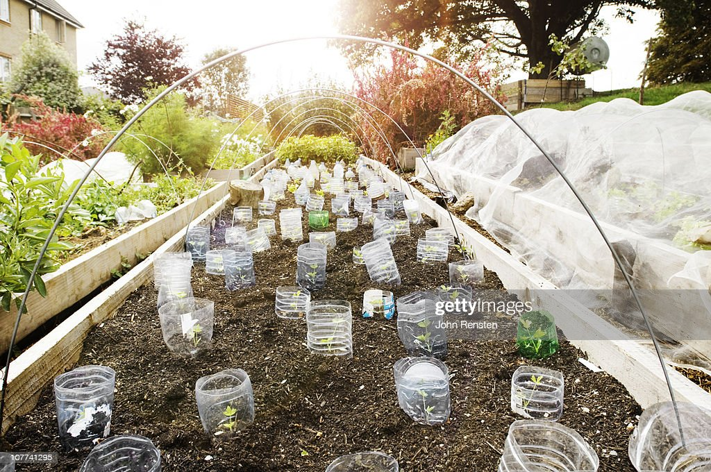 inner city urban allotment gardening project : Stock Photo