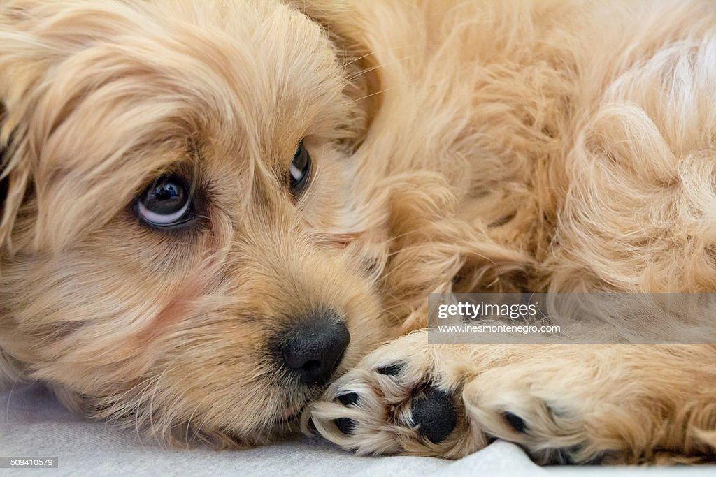 Innocent puppy dog
