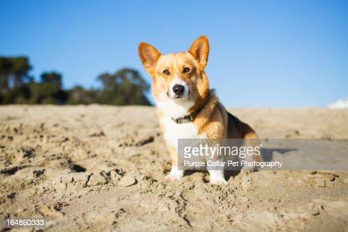 Inquisitve Dog at Beach : Stock Photo