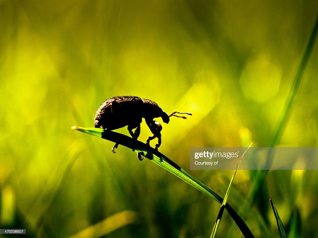 Insect Bug's Life in silhouette : Stock Photo