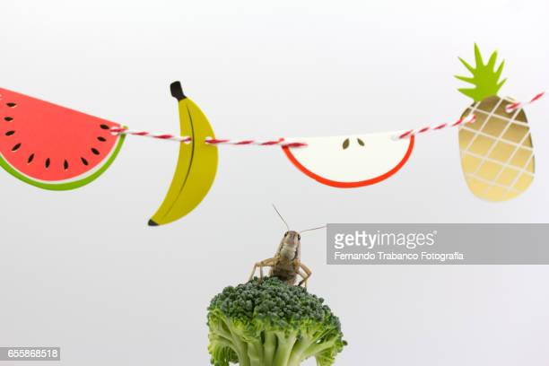 Insect eat a  broccoli Under a wreath of various fruits, fruit macedonia