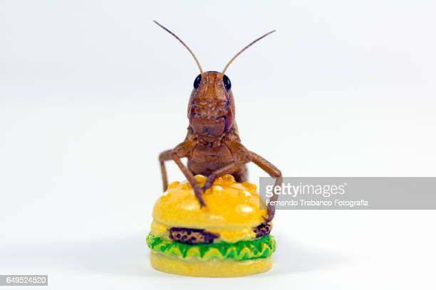 Insect eating a hamburger