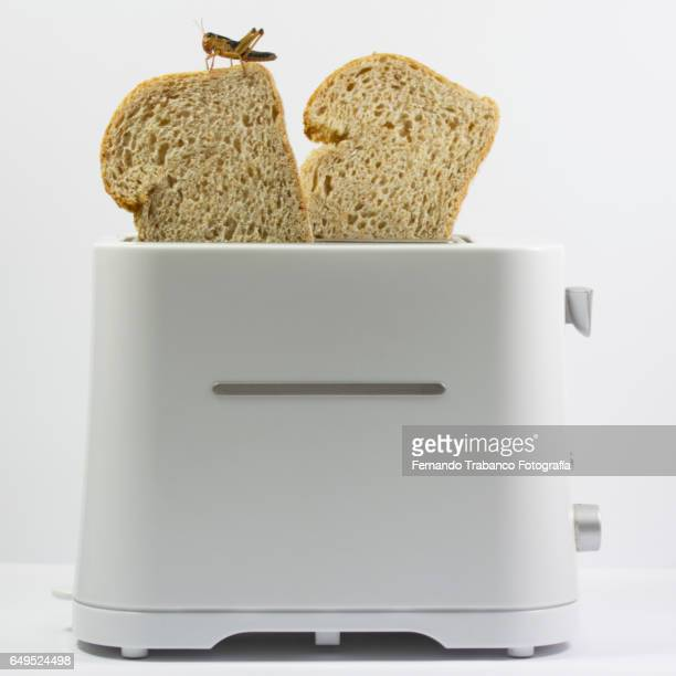 Insect eating toast of bread in a toaster