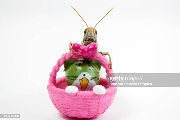Insect grasshopper hidden behind a basket with a kitten