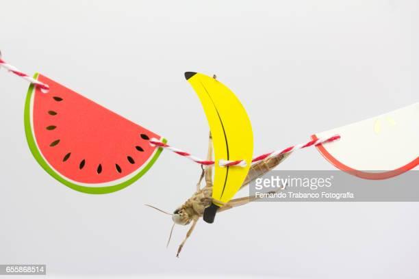 Insect hides behind a cardboard banana