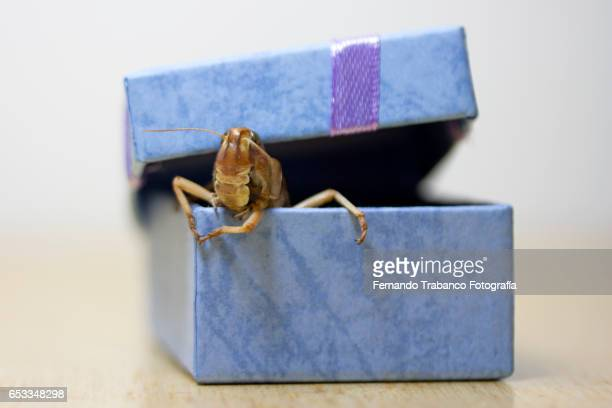 Insect in a gift box