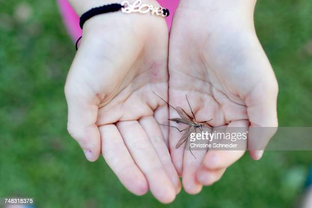 Insect in palms of cupped hands