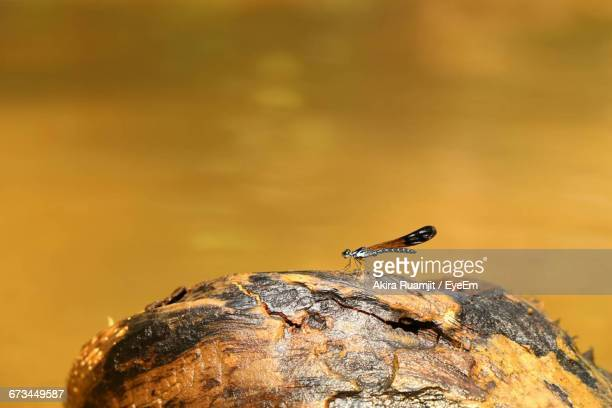 Insect On Rock Against Lake