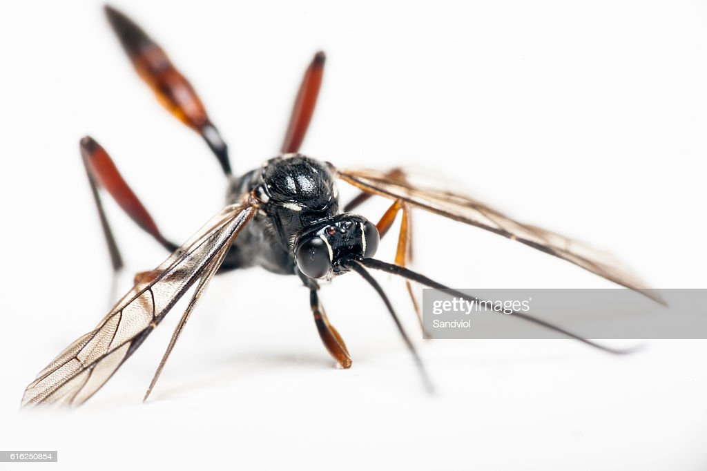 Insect on white background : Stock Photo