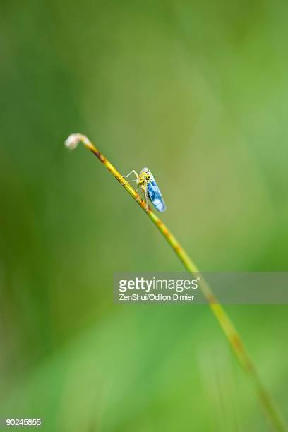 Insect perched on broken stem of flower