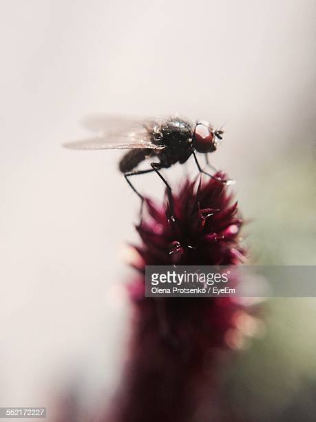 Insect Perching On Flower