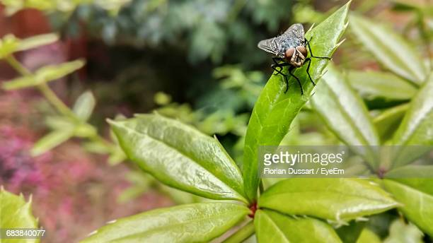 Insect Perching On Green Leaf
