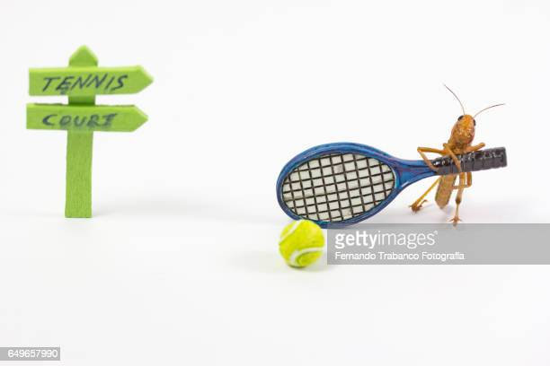 Insect strikes the ball with a racket of tennis in tennis court
