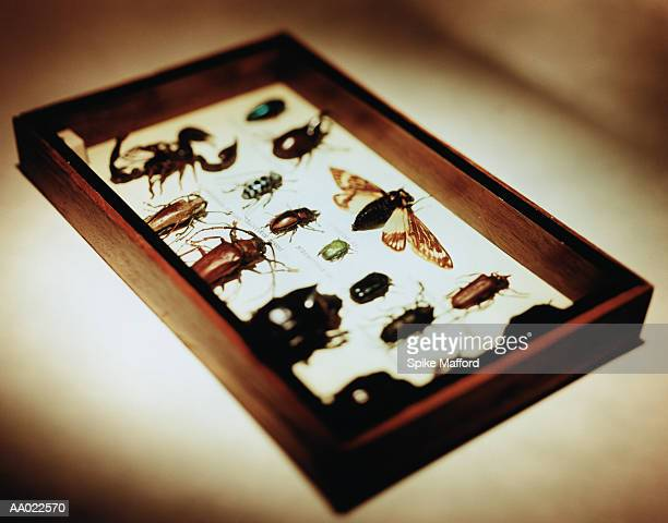 Insects Mounted in a Display Case
