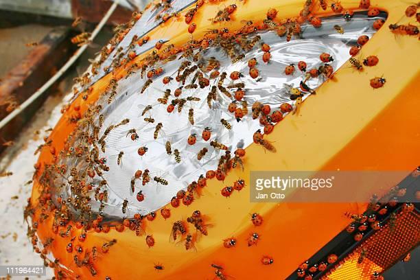 Insectes sur moto
