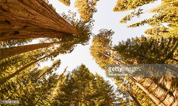 Inside the Sequoia National Park