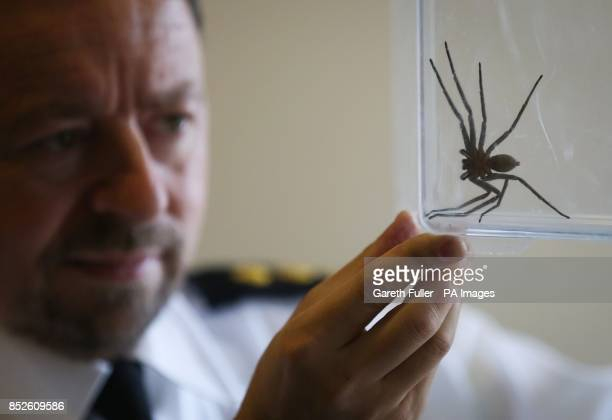 Inspector Tony Woodley holds a seveninchlong huntsman spider common to Australia which was discovered in a delivery at the Seventies BMX Distribution...