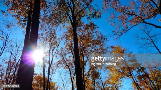 Inspirational sunburst shining through fall foliage. : Stock Photo