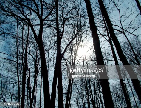 Inspirational sunlight shining through trees. : Stock Photo