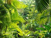 Interior of a rainforest, Malaysia