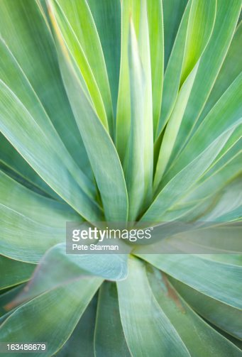 Interior Of Aloe Vera Stock Photo | Getty Images