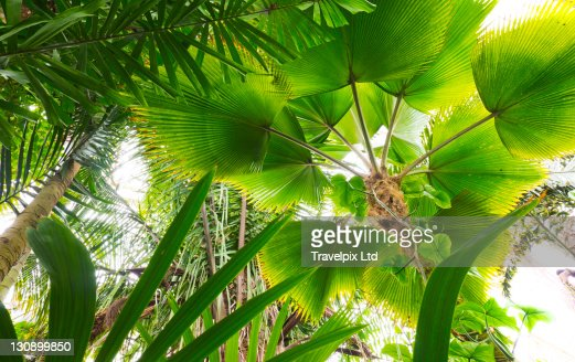 Interior of Amazon Rainforest, Amazonia, Brazil