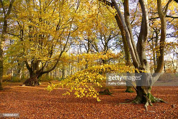 Interior of autumn woodland