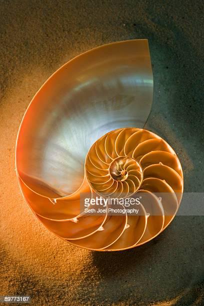 Interior of nautilus shell on sand