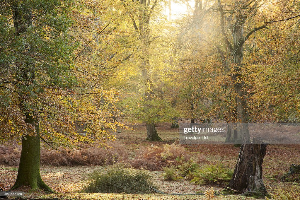 Interior of the New Forest, Hampshire, UK