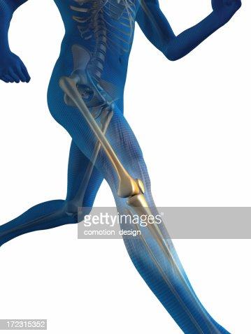 Internal view of man's bones while he runs