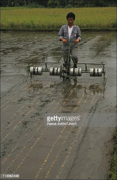 International Rice Research Institute On January 1st 1991 In Philippines The IRRI Developed Drum Seeder For Row Seeding On Puddled Soil