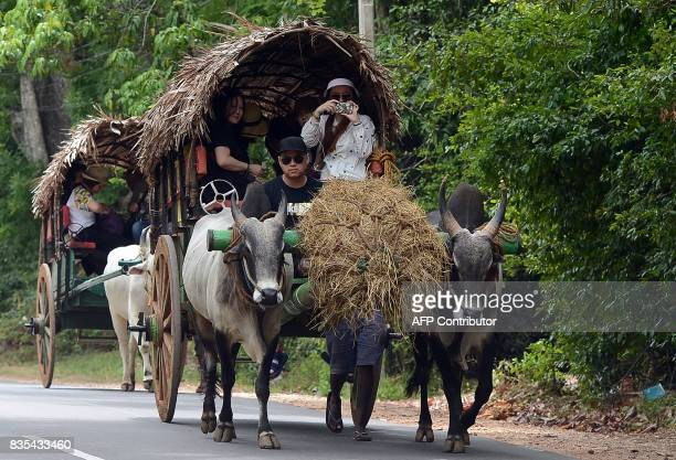 International tourists ride a cart pulled by an ox during a sightseeing tour in the ancient Sri Lankan city of Sigiriya some 165km north of the Sri...