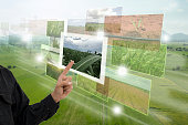 Internet of things(agriculture concept),smart farming,industrial agriculture.Farmer point hand to use augmented reality technology to control ,monitor and mangement in the farm