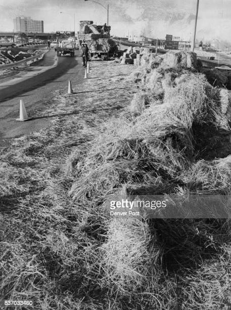 Interstate Ramp becomes a ' Hayway ' About 200 bales of hay fell off this hay truck Wednesday afternoon as the driver Meryl Serr Loveland Colo was...
