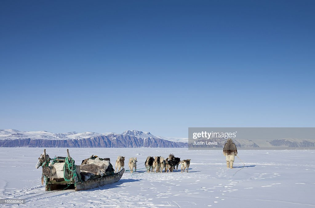 Inuit man in fur walks with dogs and sled on ice : Stock Photo