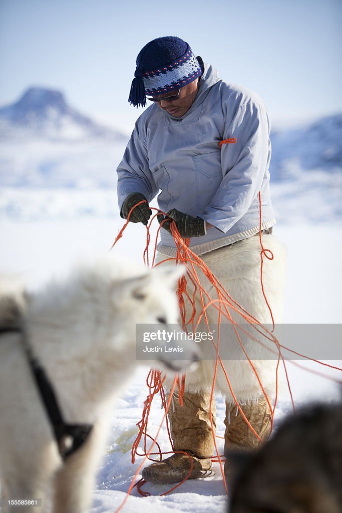 Inuit man untangles ropes for sled dogs in snow : Stock Photo