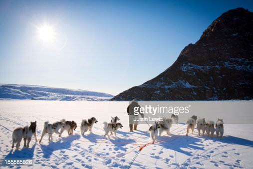 Inuit man walks with sled dogs on snowy sea ice : Stock Photo